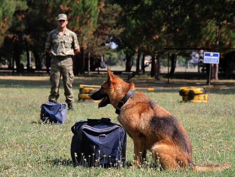 Kahraman köpeklerin nefes kesen gösterisi