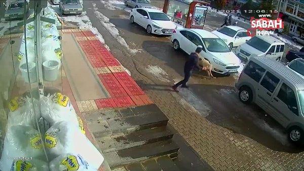 Kendisine saldıran köpeği yumruklayarak kurtuldu | Video