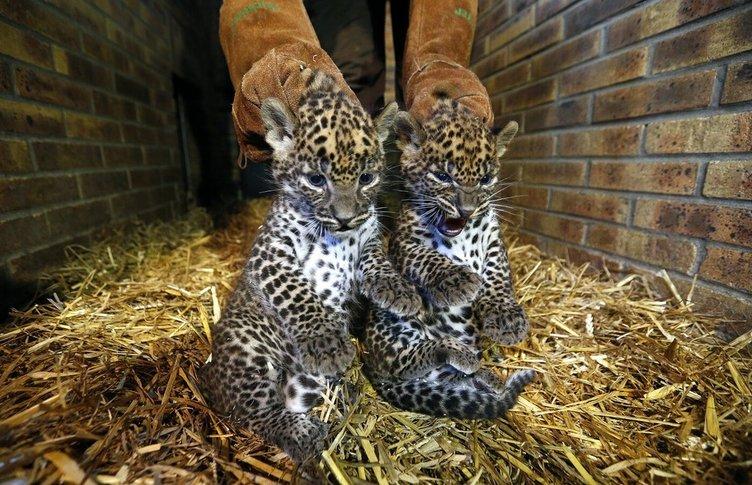 2014'ün en sevimli hayvanları