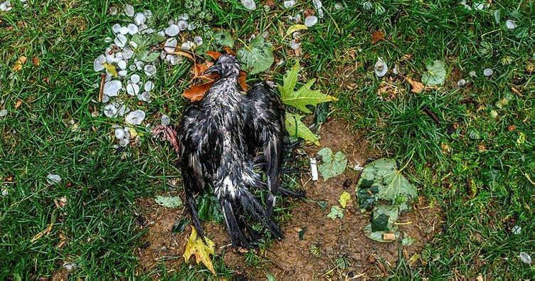 Kadıköy'de dolunun vurduğu kuşlar öldü