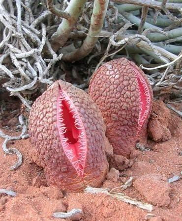 Dünyanın en ürkütücü bitkileri