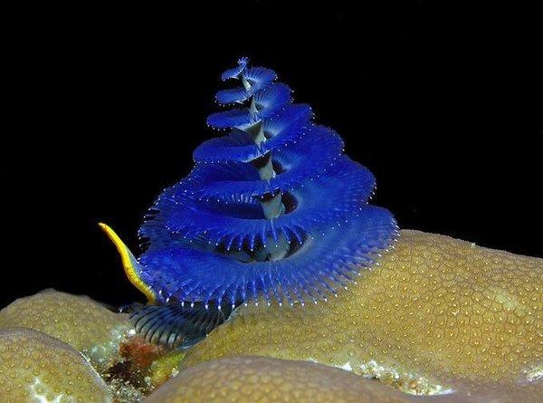 Su altının ilginç canlıları