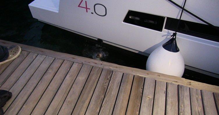 Kedi, köpekten kurtulmak için denize atladı
