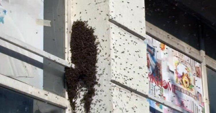 İstanbul Bağcılar'da arı istilası!
