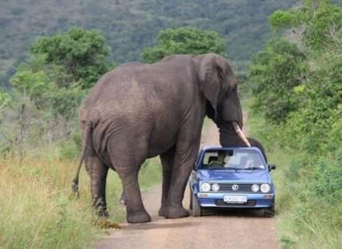 Afrika'ya özgü inanılmaz fotoğraflar