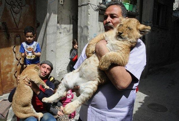 Gazzeli adamın aslan sevgisi