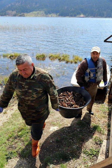 Abant Gölü'nde kerevit istilası