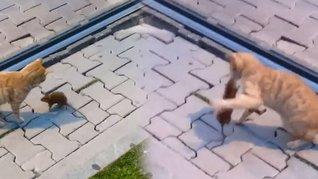 Antalya'da peşine takılan kediyi yumruklayarak döven fare kamerada | Video