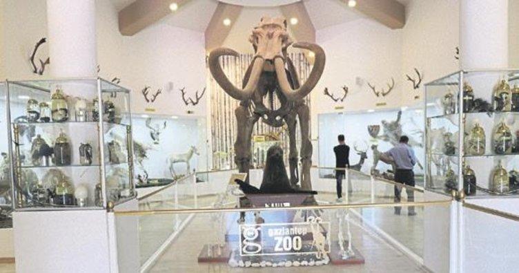 Zooloji ve Doğa Müzesi'ne yoğun ilgi