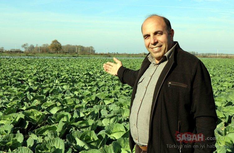 Mor ve beyaz lahana altın yılını yaşıyor! Yüzde 120 arttı...