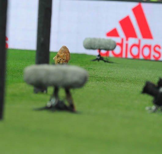 Beşiktaş-Bayern Münih maçında sahaya giren kedi sosyal medyayı salladı