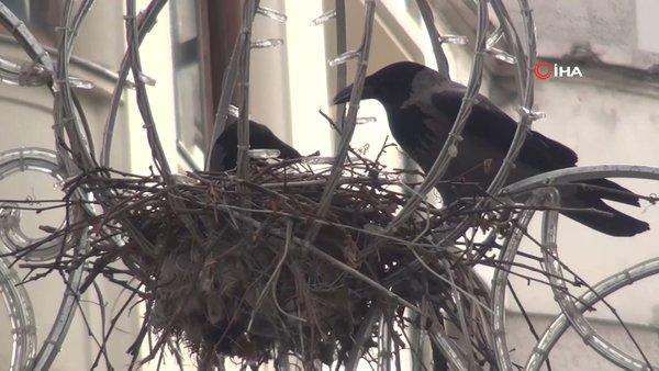 İstanbul Taksim'de görenleri şaşkına çeviren ilginç kuş yuvası | Video