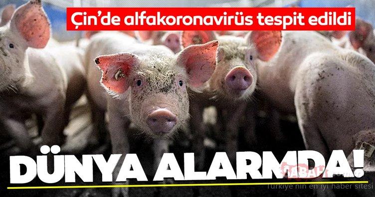 SON DAKİKA: Dünya alarma geçti! Çin´de bulunan alfakoronavirüsün insanlara bulaştığı tespit edildi