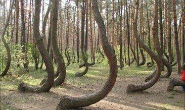 İşte doğadaki ilginç silüetler!