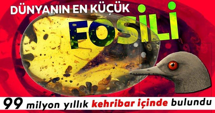 99 milyon yıllık kehribar içinde dünyanın en küçük dinozor fosili keşfedildi