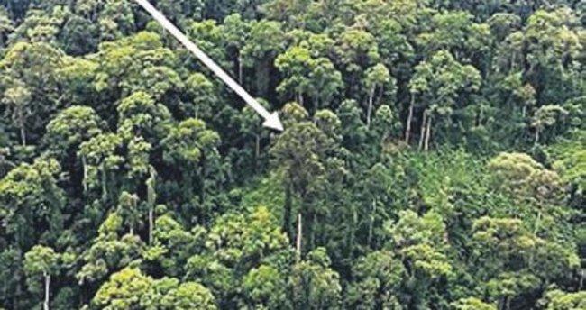 İşte uzun tropikal ağaç