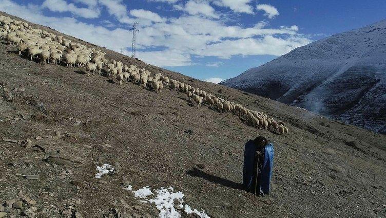 Üniversite mezunu genç, 300 koyuna çobanlık yapıyor