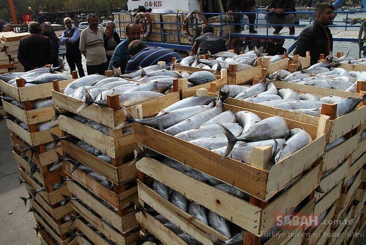 14 metrelik tekneden çıkan balık sayısı şoke etti!