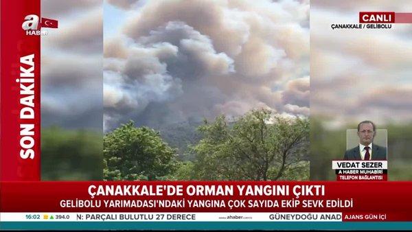 Son dakika: Çanakkale'de orman yangını   Video