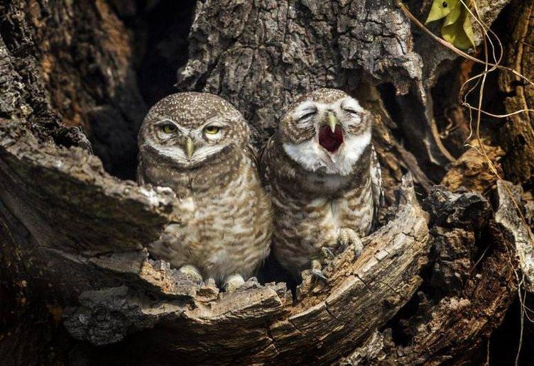 2015'in en güzel hayvan fotoğrafları