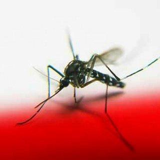 Sıtma belirtileri nelerdir? Sıtma neden olur, nasıl geçer?