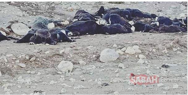 Korkunç Görüntü Ortaya çıktı! 300'ü Birden öldü