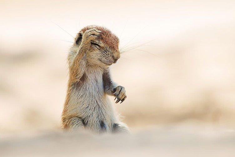Vahşi doğanın komik fotoğrafları