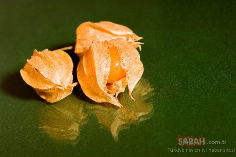 Ünlüler zayıflamak için bu besini tercih ediyor! İşte mucizevi besin altın çilek...