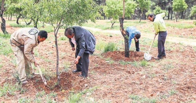 Şehitkamil'de kuşlara özel meyve ağaçları