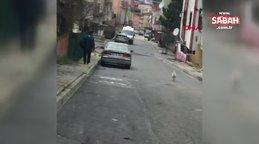 İstanbul'da kendisine taş atan postacıdan intikam alan horoz kamerada