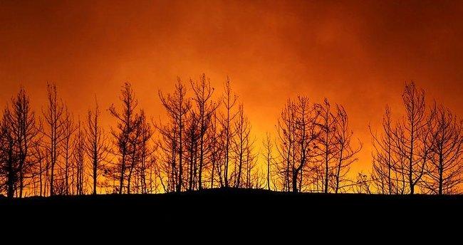 Orman Genel Müdürlüğü açıkladı: Milas, Bodrum, Çökertme, Marmaris yangınlarında son durum ne?