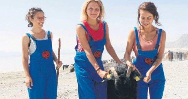 Gönüllü çobanlar