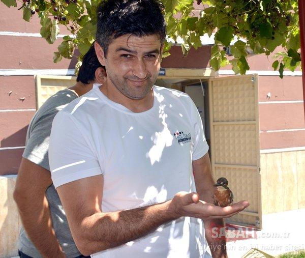 Zonguldak'ta yaralı olarak bulunan bayağı yalıçapkını yetkililere teslim edildi