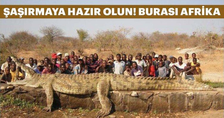 Burası Afrika!