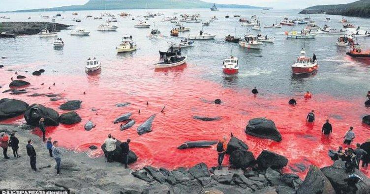 Deniz kandan kırmızı!