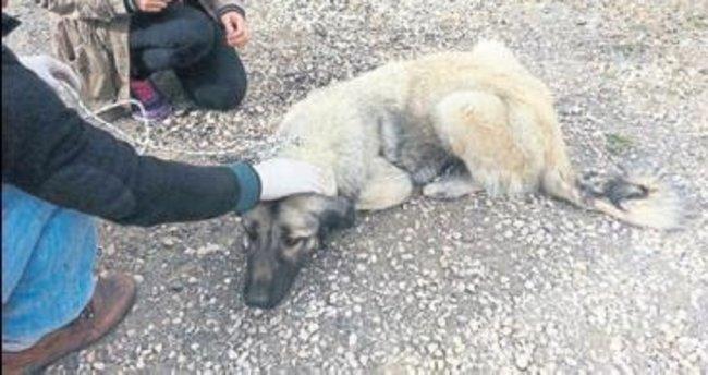 Akseki'de başıboş köpekler toplandı