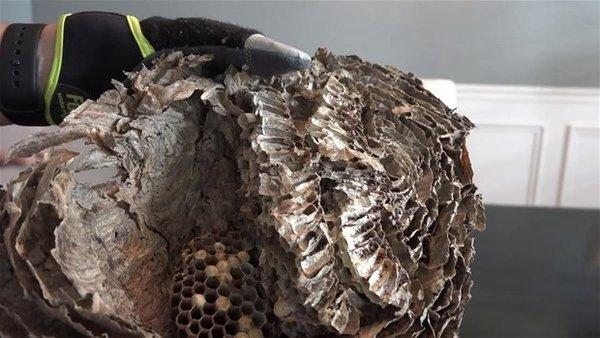 Arı kovanının içinde ne var?
