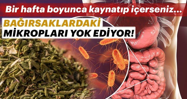 Bağırsaklardaki mikropları yok ediyor!