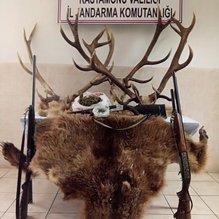 Ayı, karaca ve geyik vuran zanlılara 67 bin TL para cezası