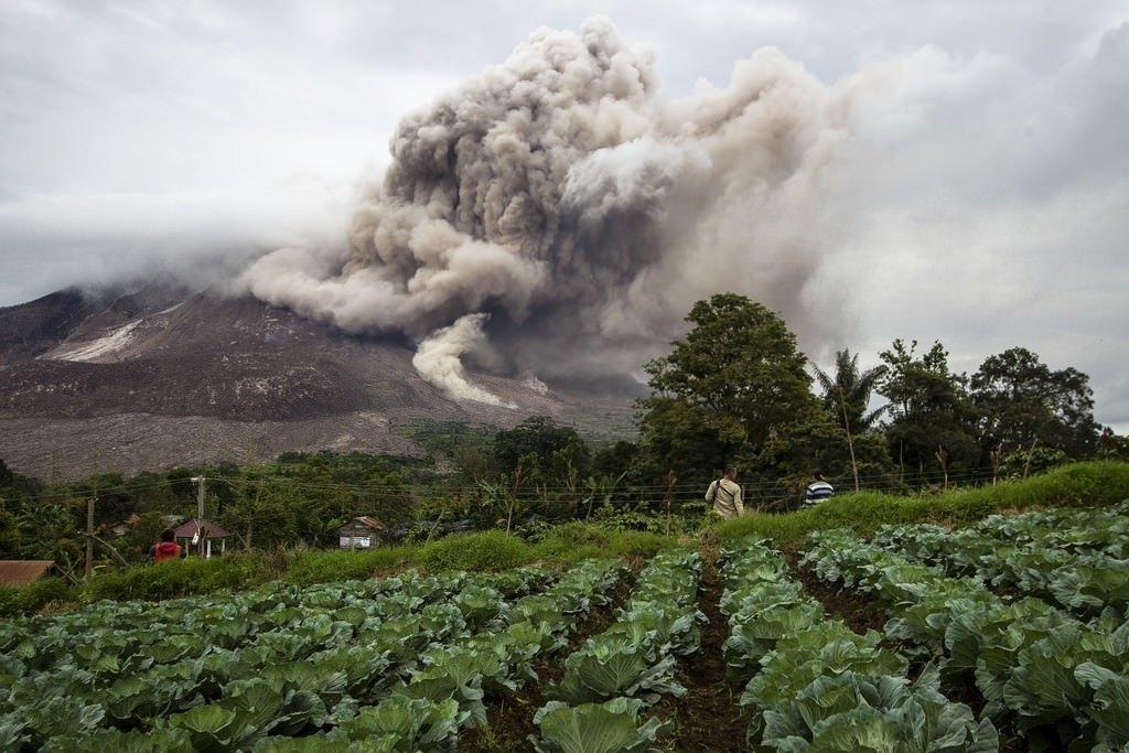 картинки про плодородие почвы возле вулканов самых распространённых