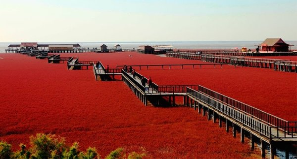 Çin'deki kırmızı sahil