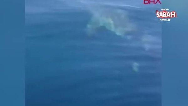 Dehşet görüntüleri! ABD'de dev köpekbalığı balık tutanlara böyle saldırdı | Video