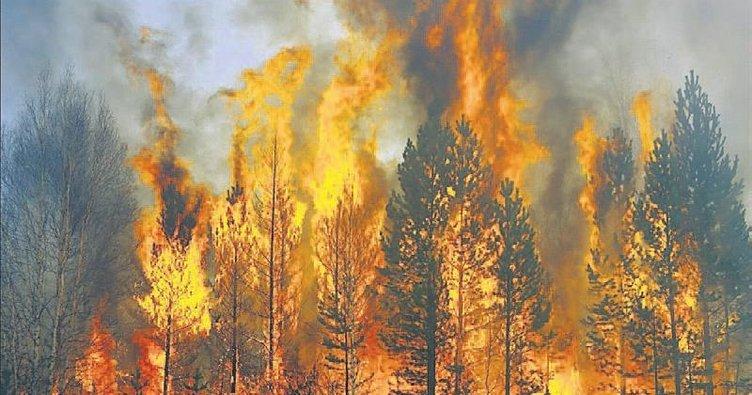 Eyvah! Sibirya ormanları yanıyor