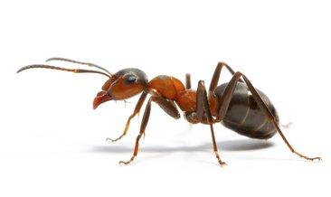 Rüyada karınca görmek ne anlama gelir?