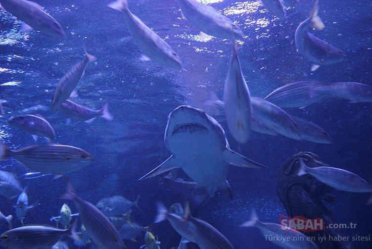 En tehlikeli görev! Köpek balıklarını elleriyle besliyorlar...