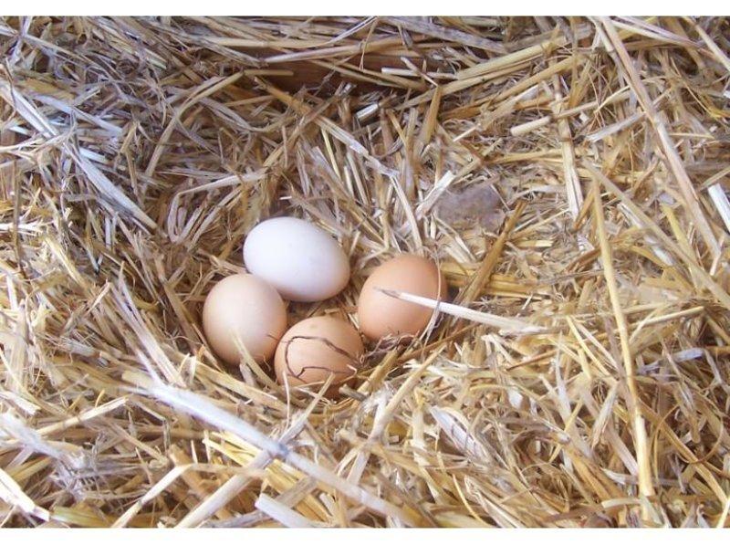 Gercek Koy Yumurtasi Nasil Anlasilir En Son Haber