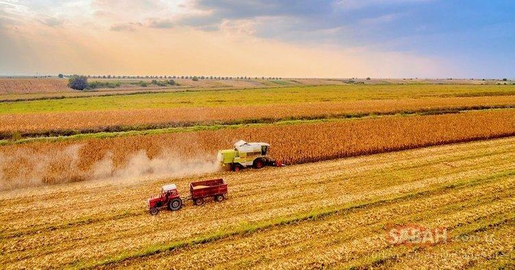Çiftçiye 5.5 milyarlık gelir kaybı desteği geliyor!