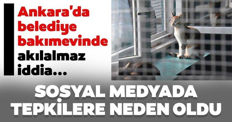 Son dakika: Ankara'da belediye bakımevinde '20 kediye ötanazi' iddiası tepkilere sebep oldu!