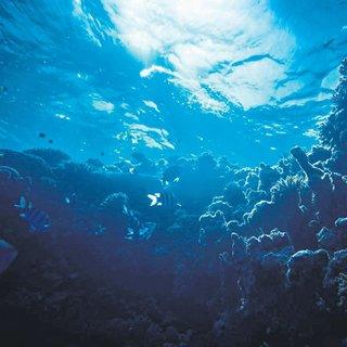 Okyanusta müthiş keşif