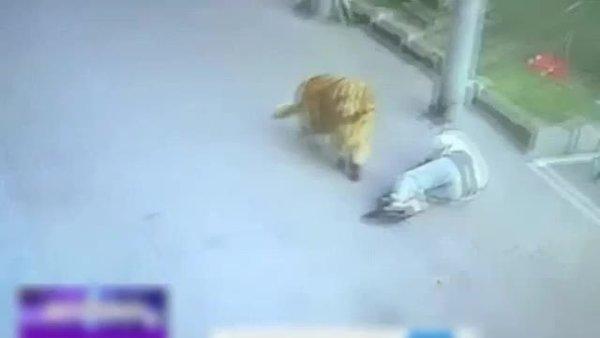 Sokakta yürürken başına gökyüzünden kedi düştü | Video